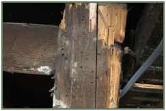 Advance Property Preservation | Timber Infestation Services in London